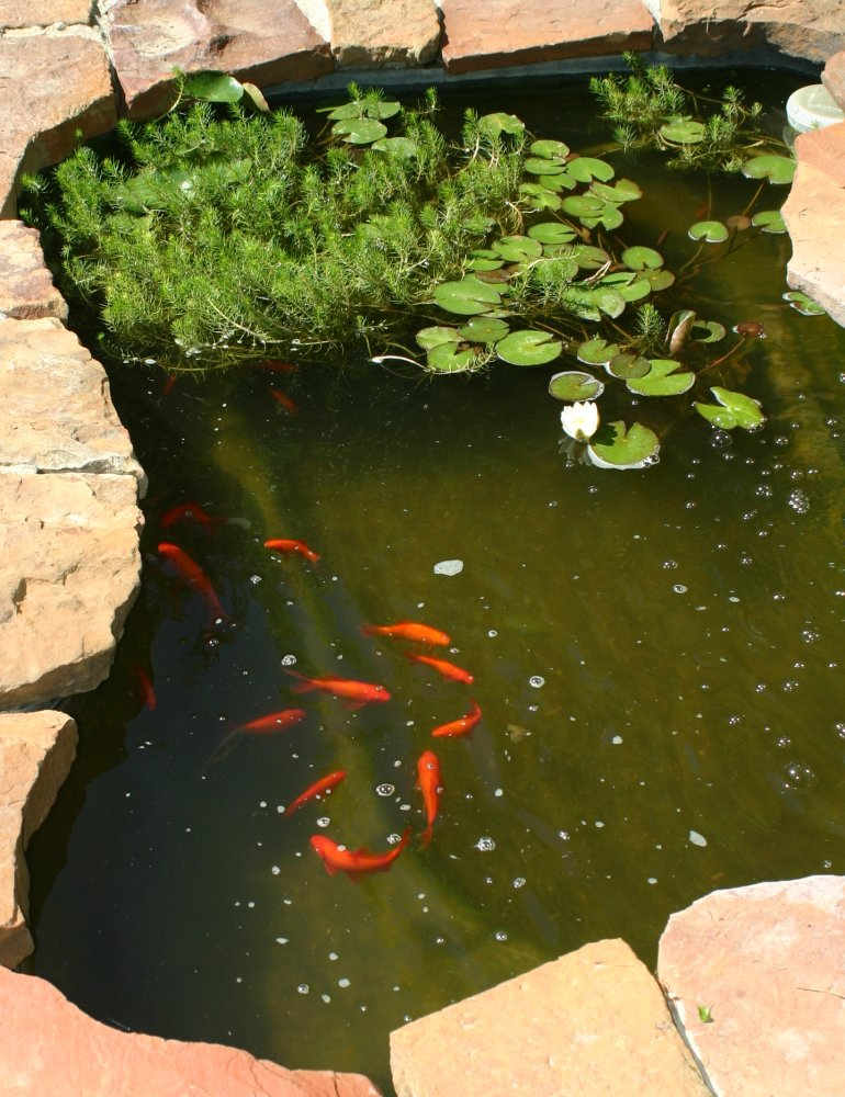 Pond and pits for Outside goldfish pond